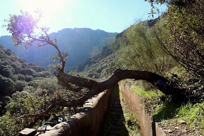 Árboles caídos-Ruta del Acueducto de las Herrerías