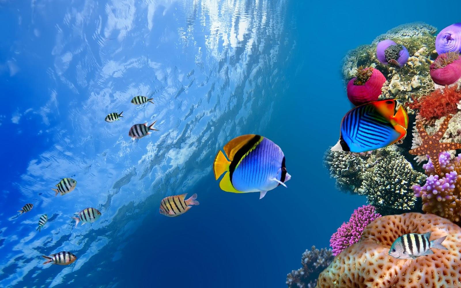 El Fondo Marino Museo de la Ciencia: La Vida en el Mar