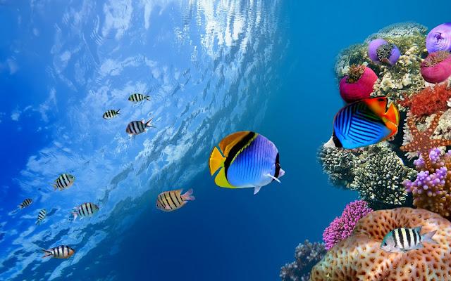 Imagenes de Peces de Colores en el fondo de Arrecifes de Coral
