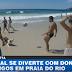 Παίζοντας με τον σκύλο μπάλα σε παραλία στο Ρίο...