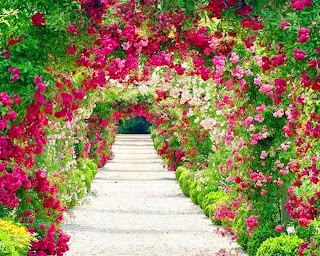 Flores rosas y rojas para una corona  Paisajes de flores