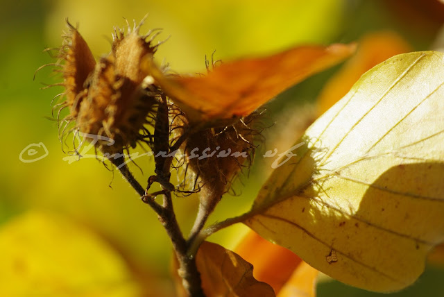 [Photography Tuesday] Autumn Song