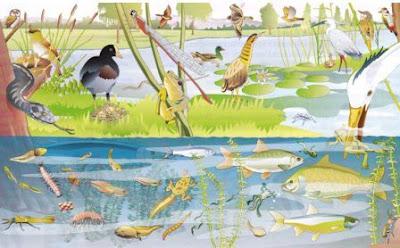 ecosistema fluviale in equilibrio