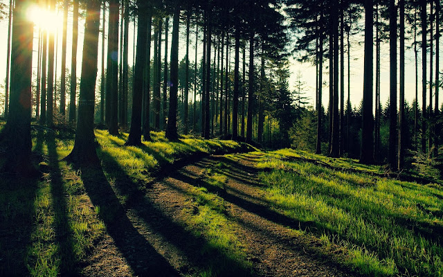 Morning Sunlight Wallpapers Free Download