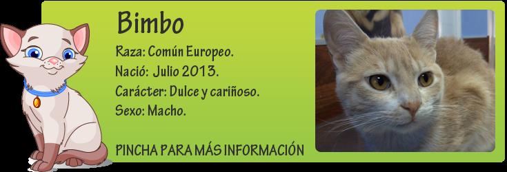 http://mirada-animal-toledo.blogspot.com.es/2014/03/bimbo-preciosidad-en-adopcion_12.html