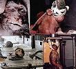 A crueldade tem que ter fim.
