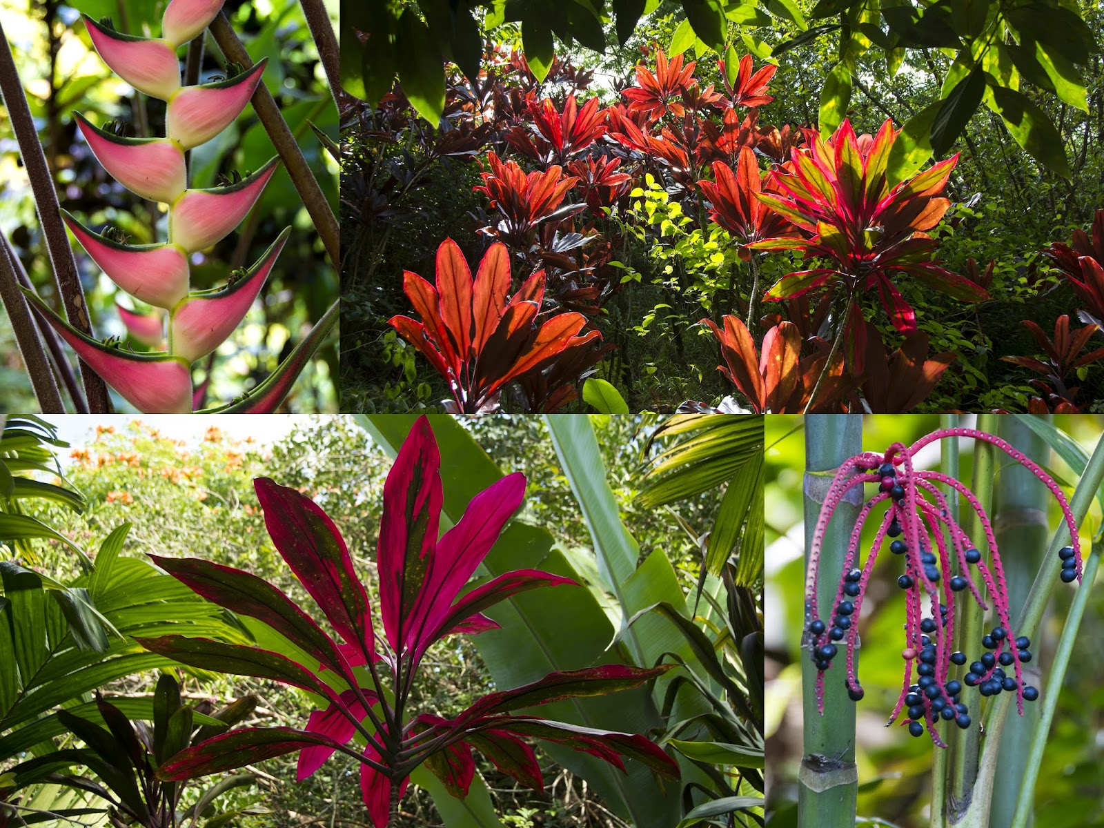 Plants In The Tropical Rainforest Collage All Things Elise &...