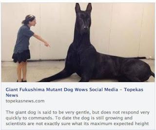 Υπάρχει όντως «μεταλλαγμένος σκύλος» από την Fukushima; Ας ξεσκεπάσουμε ακόμη μία απάτη