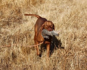 Lily and her prize. She loves to retrieve.