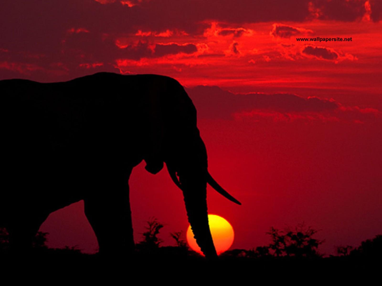 http://1.bp.blogspot.com/-1jmGyYO32EM/UAqu98xQLoI/AAAAAAAABGc/l7qodNQrkxE/s1600/gambar-untuk-gajah-perang.jpg