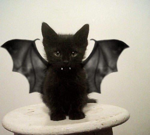 Best Cat Picture Ever
