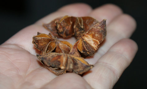 Certified Organic Fair Trade Whole Anise Star Pods