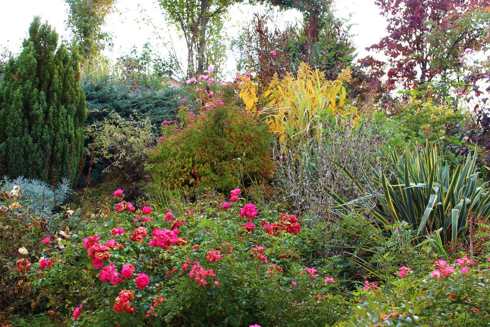 roses du jardin ch neland mon jardin aux couleurs d 39 automne. Black Bedroom Furniture Sets. Home Design Ideas