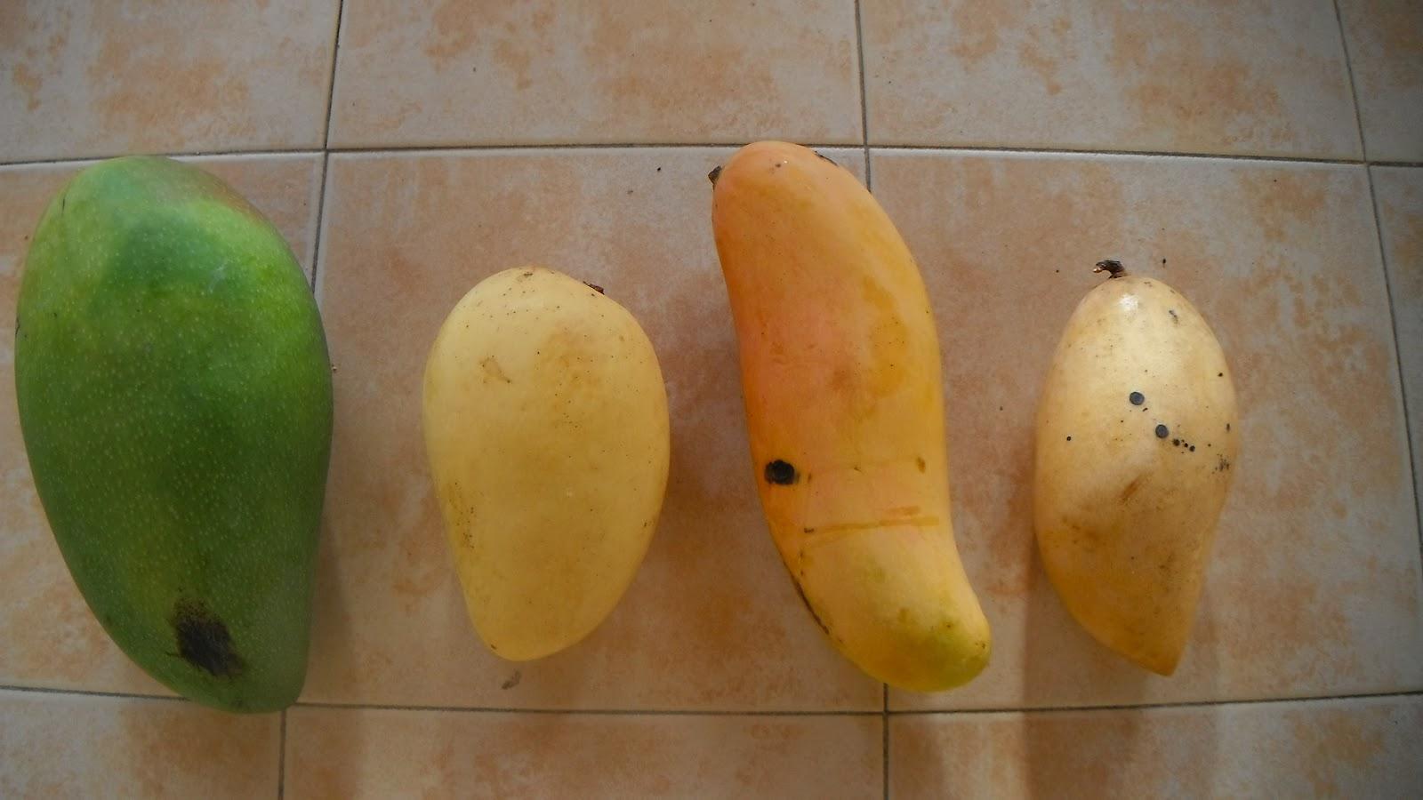 Thailand Rainbow Mango Rainbow Mango