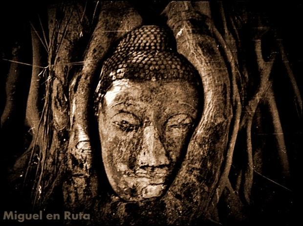 Head-Buddha-Banyan-Ayutthaya