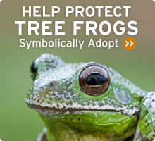 Help Protect the Tree Frogs Too! JUST ONE CLICK