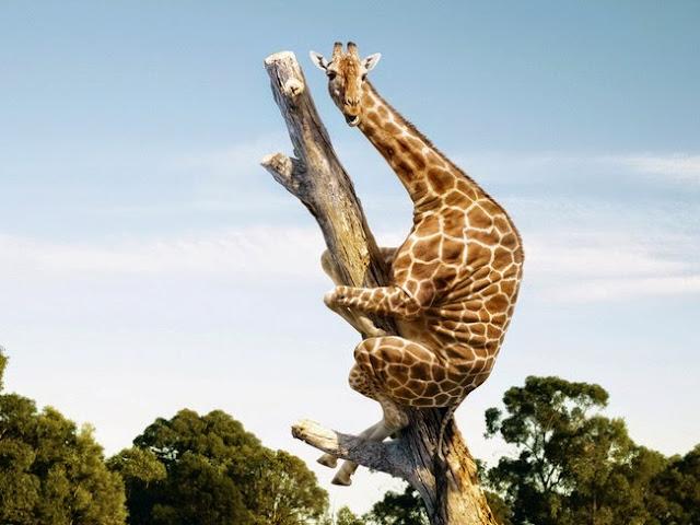 как до жирафа доходит