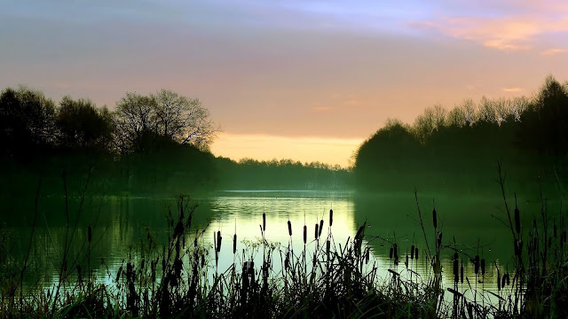 Early Morning Lake Scenery Mist Reeds Trees HD Wallpaper