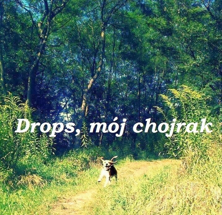 My Puppy Drops