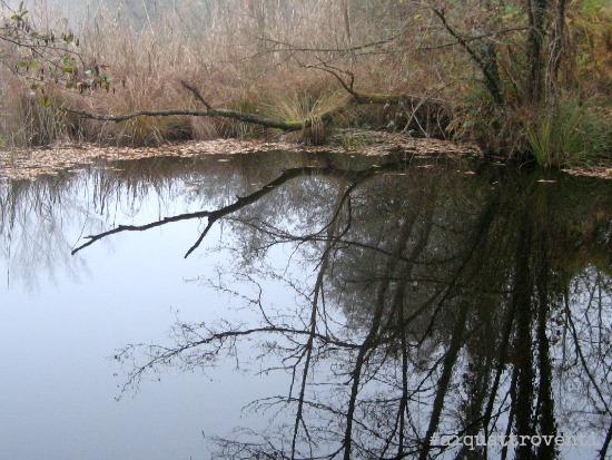 aiquattroventi-autunno-lagoni-riflessi-albero