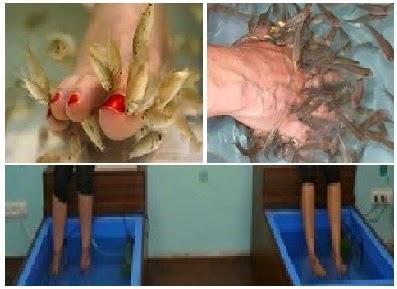 مشروع جديد فى مصر ناجح و مربح,مركز تجميل باديكير السمك,علاج الجلد الميت