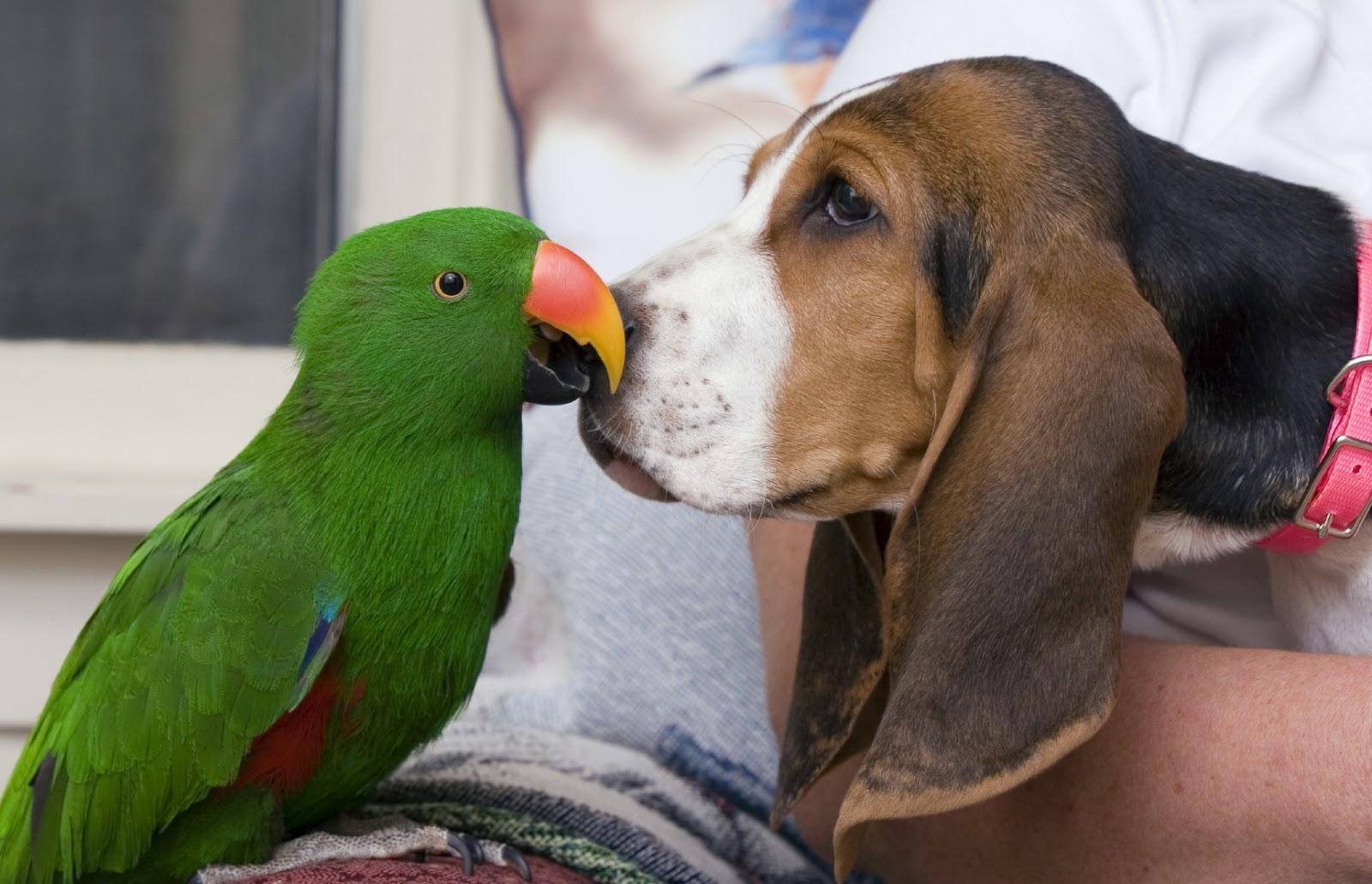 インコ犬とキス