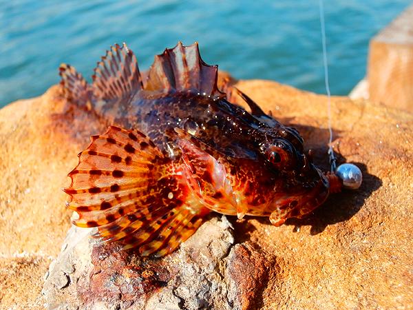 Fooling fish salt water lure fishing for Fish rock rentals