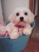 My Stampin Mascot.. Bella