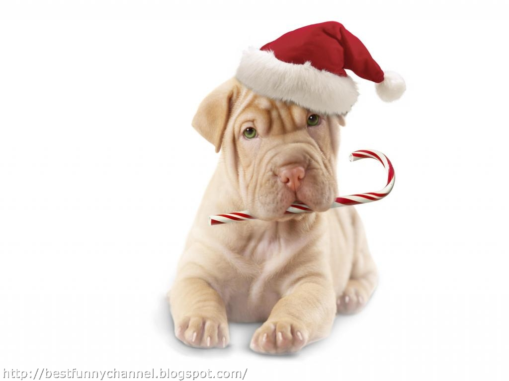 cute and funny pictures of animals 47 christmas dogs