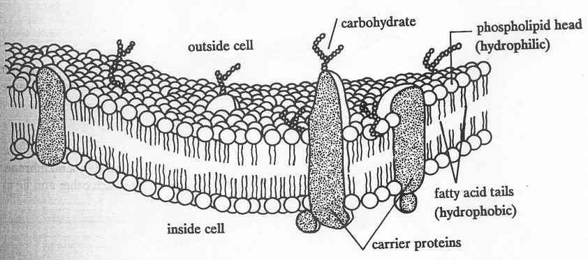 the cardiac catheterization handbook morton j kern