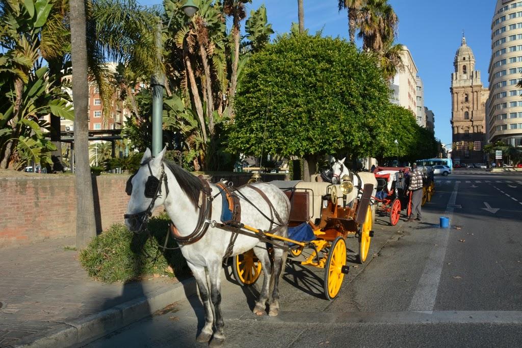 Malaga Horses
