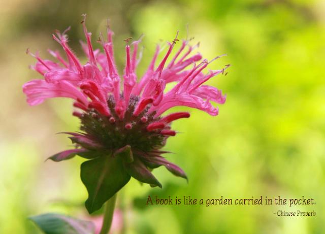 Garden Quote | iloveitallwithmonikawright.com