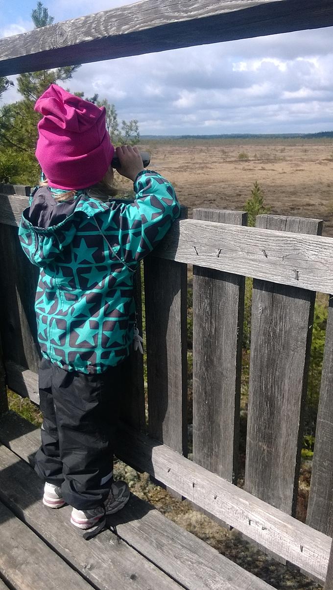 Koivusaaren lintutorni, lapsi lintubongarina