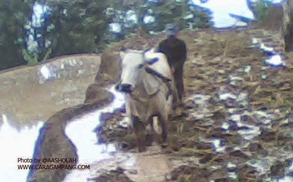Pengaruh Kegiatan Pertanian Terhadap Organisme Tanah