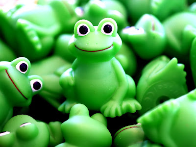 Frog green desktop background wallpapers
