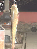 Cazanele Dunarii - Pescuit sportiv