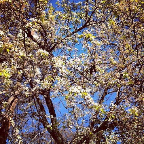 NowThisLife.com - Spring