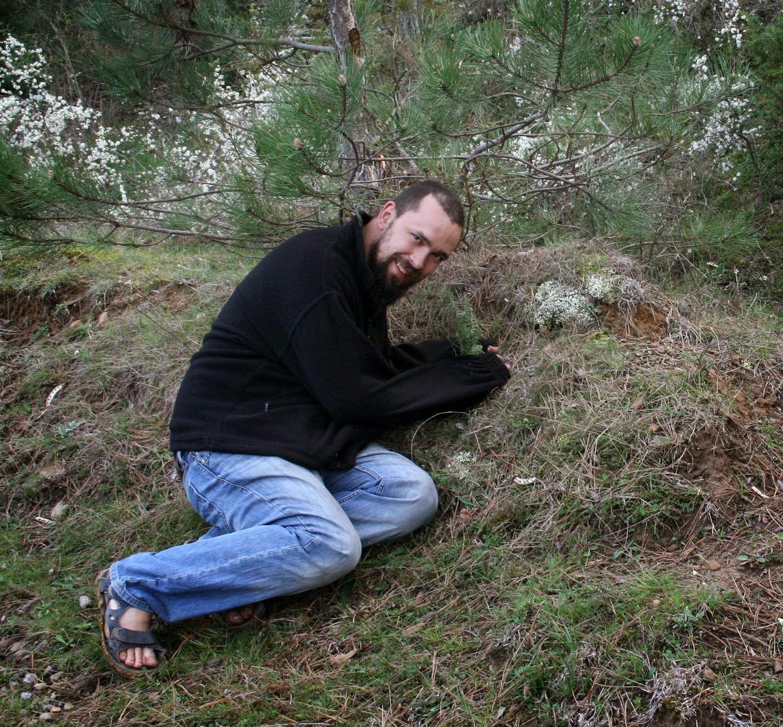 Pulling up a Juniper sapling