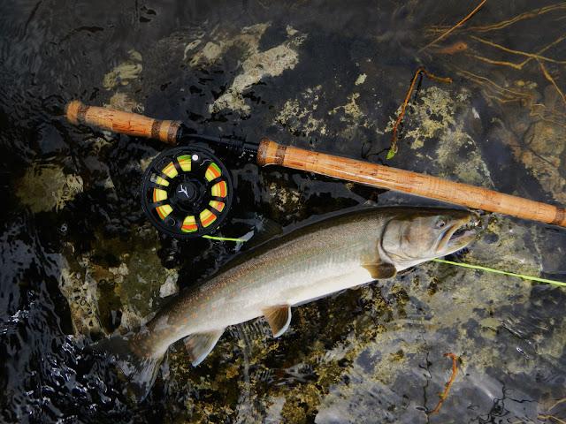Lochsa River Bull Trout
