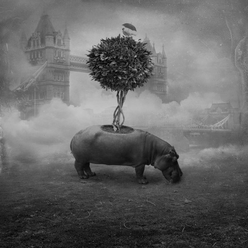 12-Last-Tree-Akşam-Gunesi-Surreal-Photo-Manipulation-to-suit-your-Mood