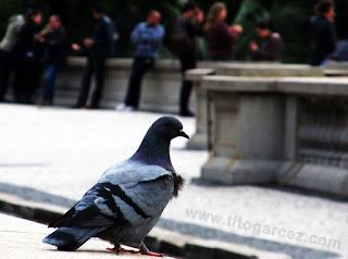 Os pombos são alguns dos visitantes frequentes do Museu Paulista (ou Museu do Ipiranga), em São Paulo