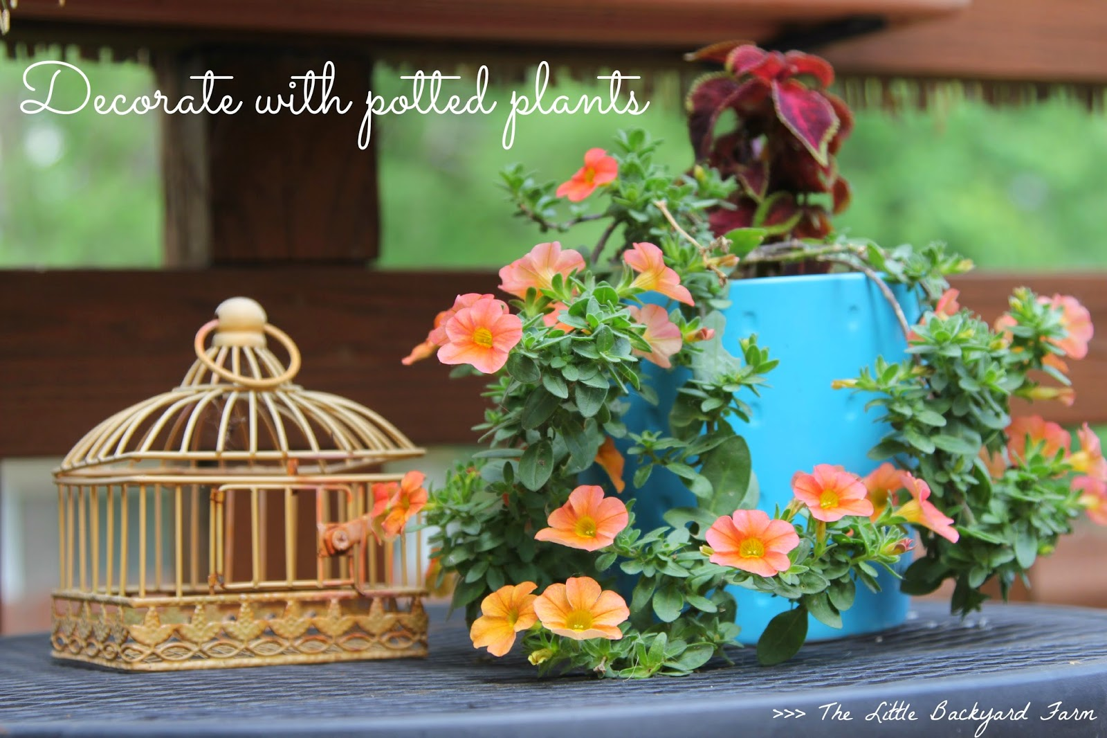 The Little Backyard Farm Ideas On How To Decorate With