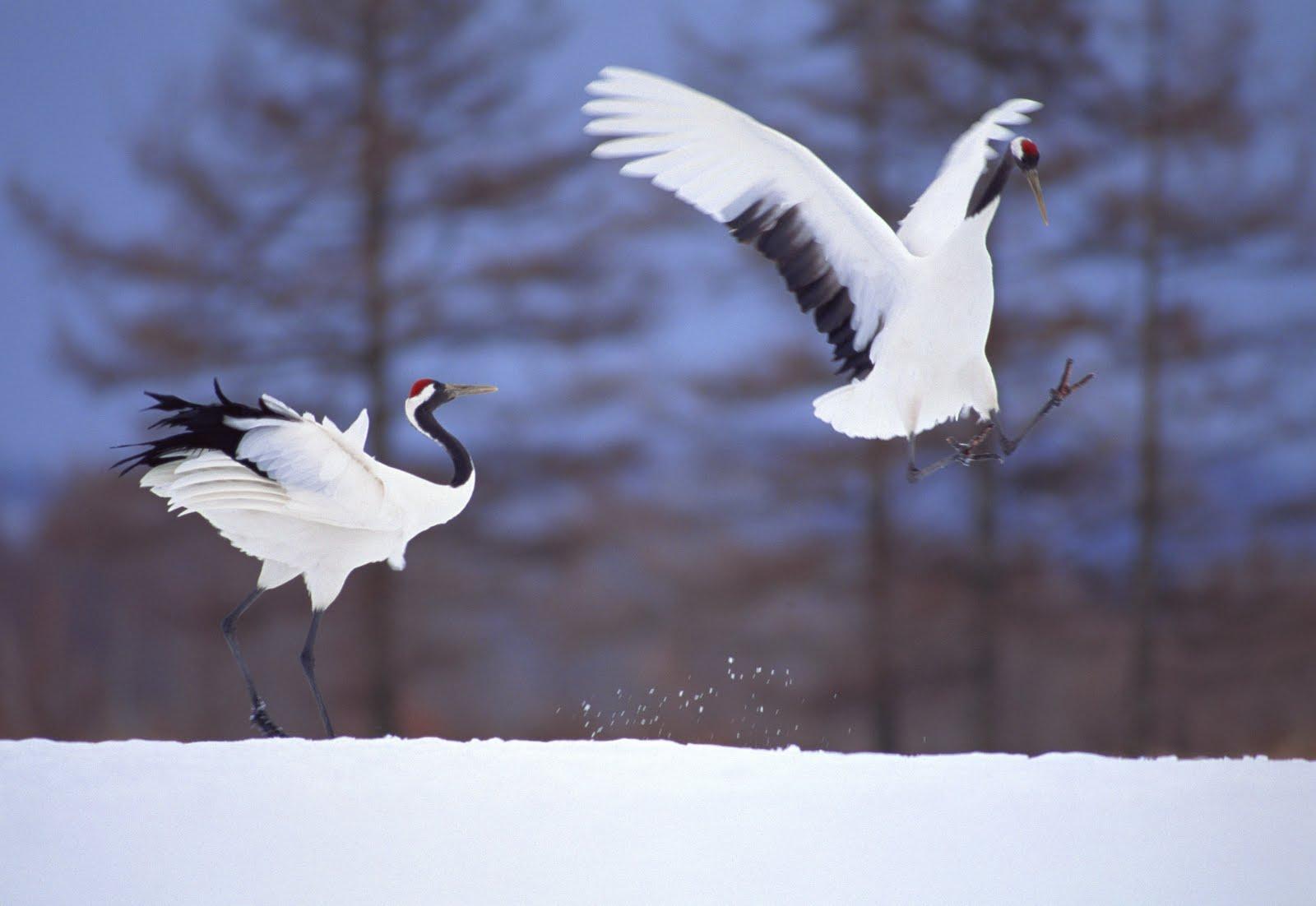 http://1.bp.blogspot.com/-1nZ7o_G3NsE/ThPqTpdkbvI/AAAAAAAAMws/BYQosETEMjk/s1600/ducks+wallpapers+birds.JPG