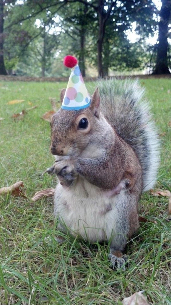 funny animals, animal pictures, squirrel wears party hat