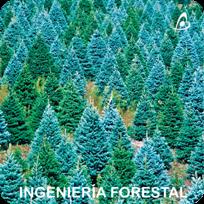 Ingeniería Forestal - Planes de Gestión Forestal - Planes Cinegeticos - Planes de Caza - Reforestaciones