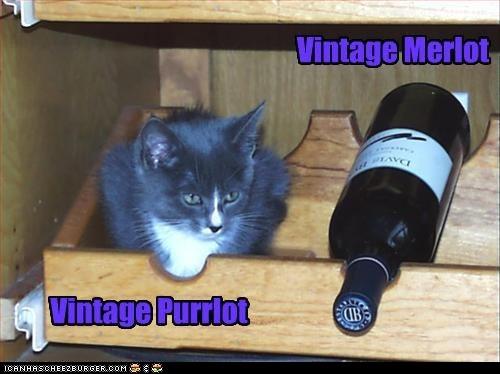 Cat Meme Wine In  Years