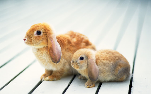 Two cute bunny