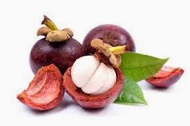 Obat Radang Usus Herbal