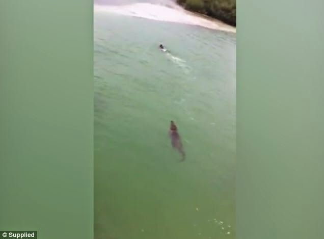 Man Chased By Crocodile Saved Thanks To Some Quick Thinking