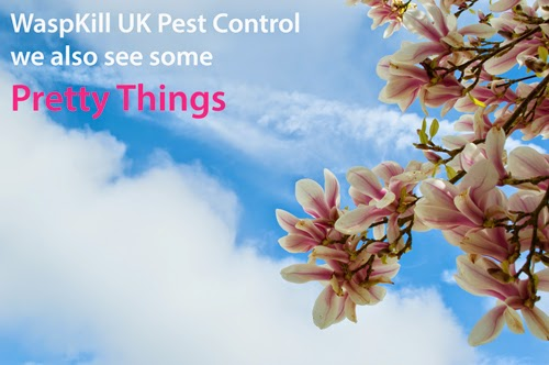 pretty pest control with WaspKill UK